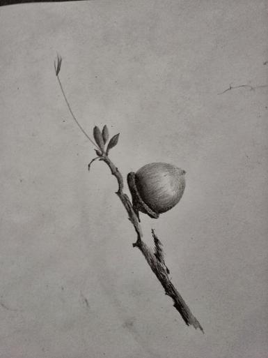 nature, pencil on paper, winter images